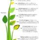 Como Abonar Y Falta De Nutrientes En Las Plantas