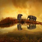 Retos  en la conservación de la biodiversidad II