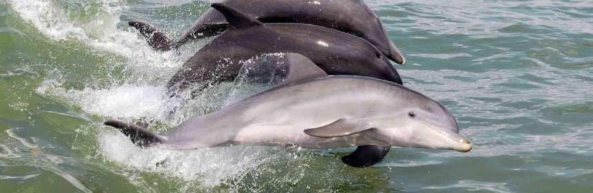 dolphin-1333986-web