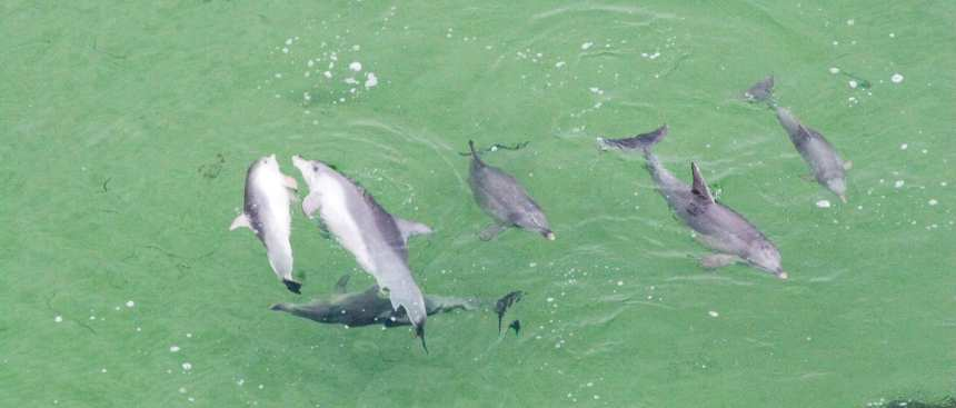 dolphins-1395649_web