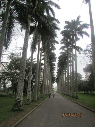 Aburi Botanical Gardens Ghana Feb 2017 Lake Arbor Travel-17