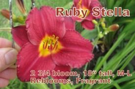 Ruby Stella