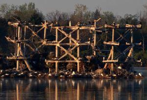 Baker's Lake Heronry: 16 Years of Restoration Success @ Heller Nature Center   Highland Park   Illinois   United States