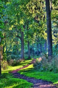 McDonald Woods and Hastings Lake @ McDonald Woods   Lake Villa   Illinois   United States