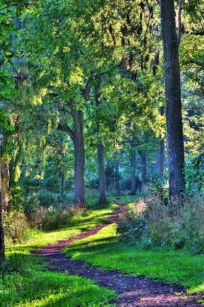 McDonald Woods Forest Preserve