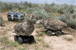 Robots, Telemetry, & the Sex Lives of Wild Birds @ Online - Zoom