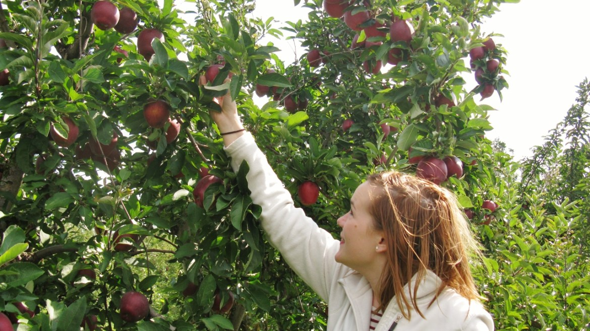 Hick's Apple Orchard
