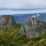 Herdie on Harter Fell