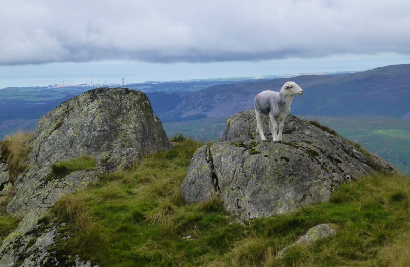 Herdick on Harter Fell