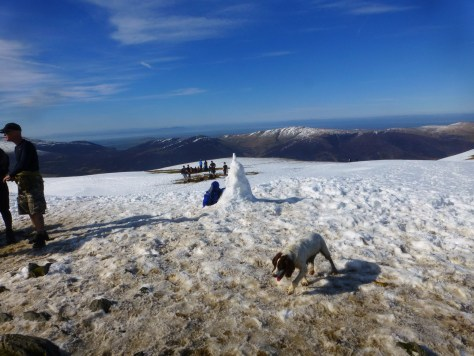 Bella on Blencathra Summit