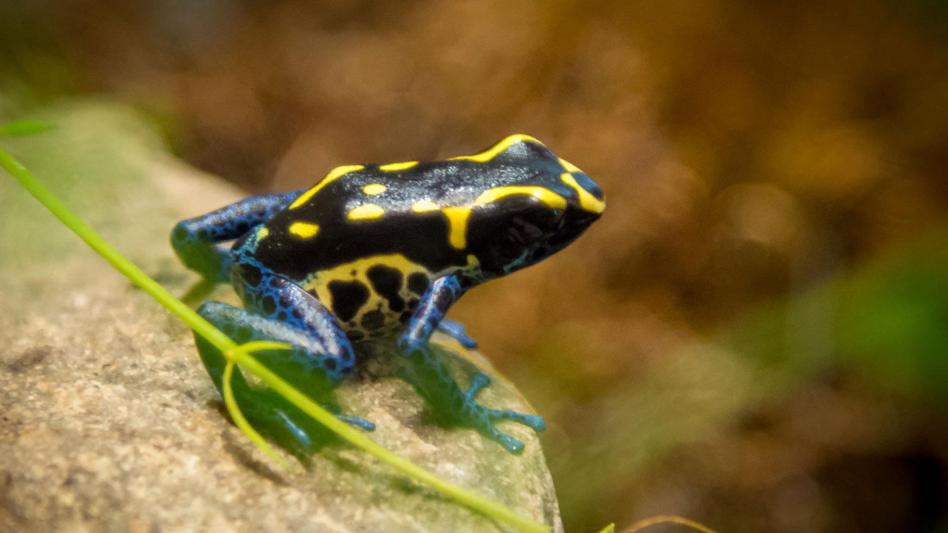 Dart frog at Lake Tobias Wildlife Park