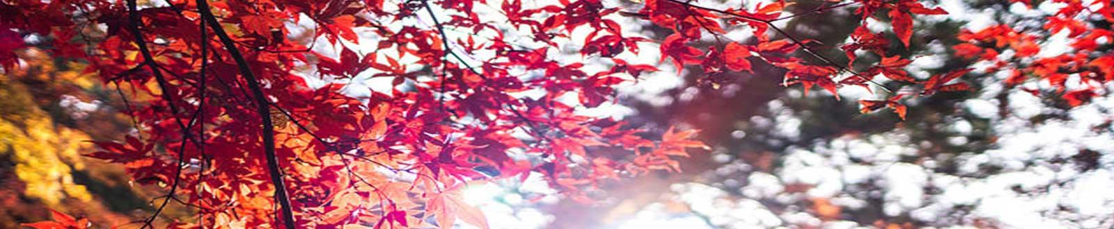 LjA_slider-sm_autumn