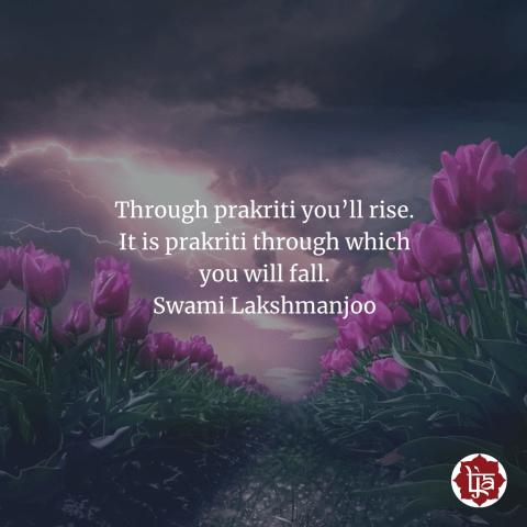 Through prakṛti you'll rise. It is prakṛti through which you will fall. ~Swami Lakshmanjoo