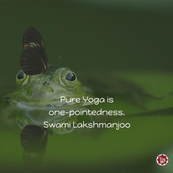 Pure Yoga is one-pointedness. ~Swami Lakshmanjoo
