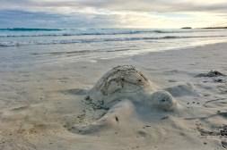 Een schildpad van zand