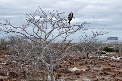 Een vogel in de boom bij Seymour Island