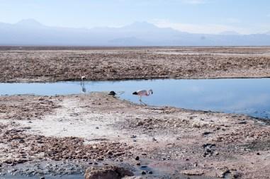 La La Leo - San Perdro de Atacama_03