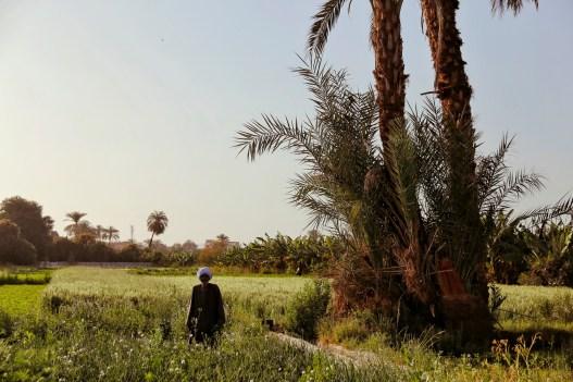 Egyptische man tussen zijn gewas aan de east-bank van Luxor