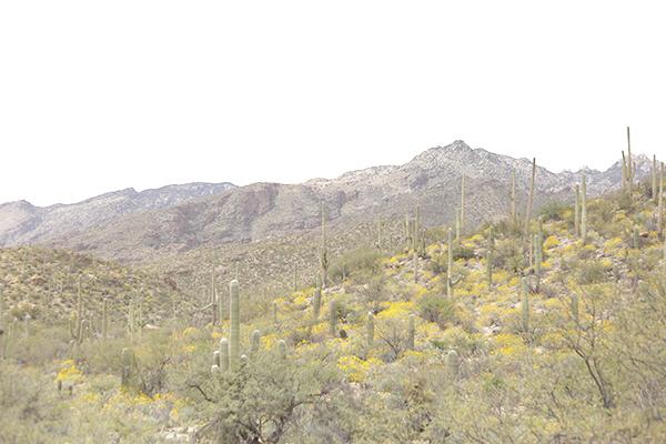 tucson mountains_ la la lovely blog
