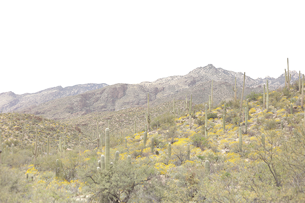 tucson mountains_ la la lovely blog