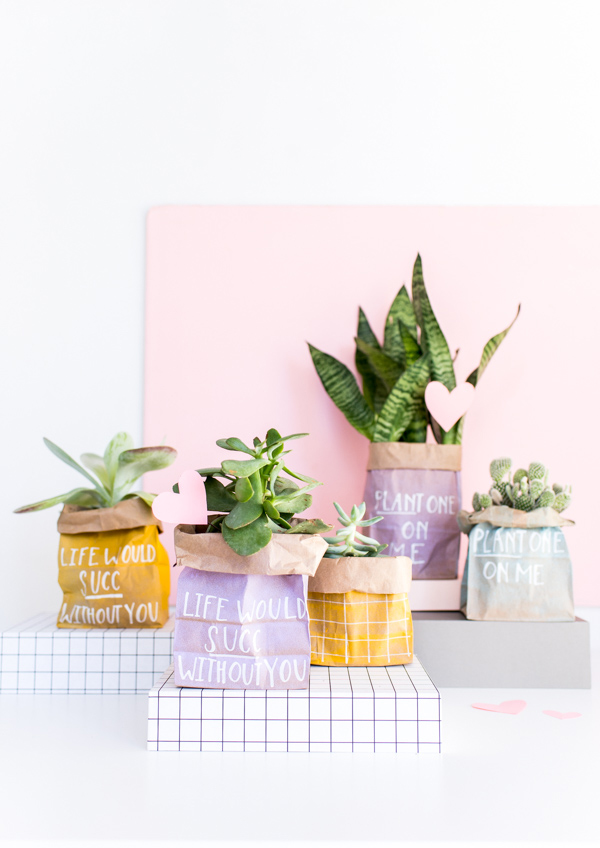 Valentine's plants