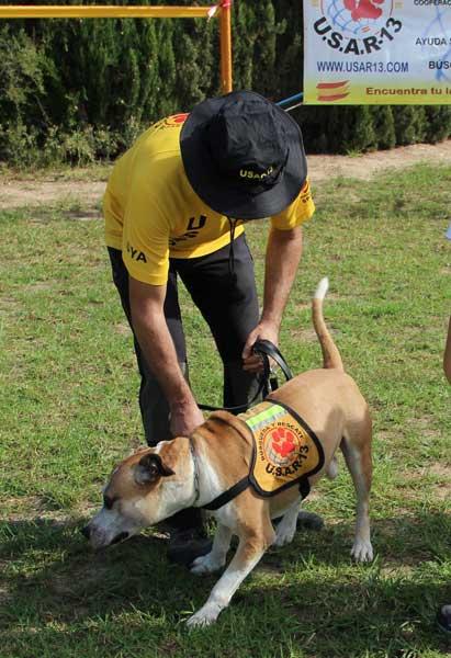 La ONG USAR 13 promueve una nueva  jornada de adiestramiento canino en el Albir, con la colaboración de la concejalia de deportes