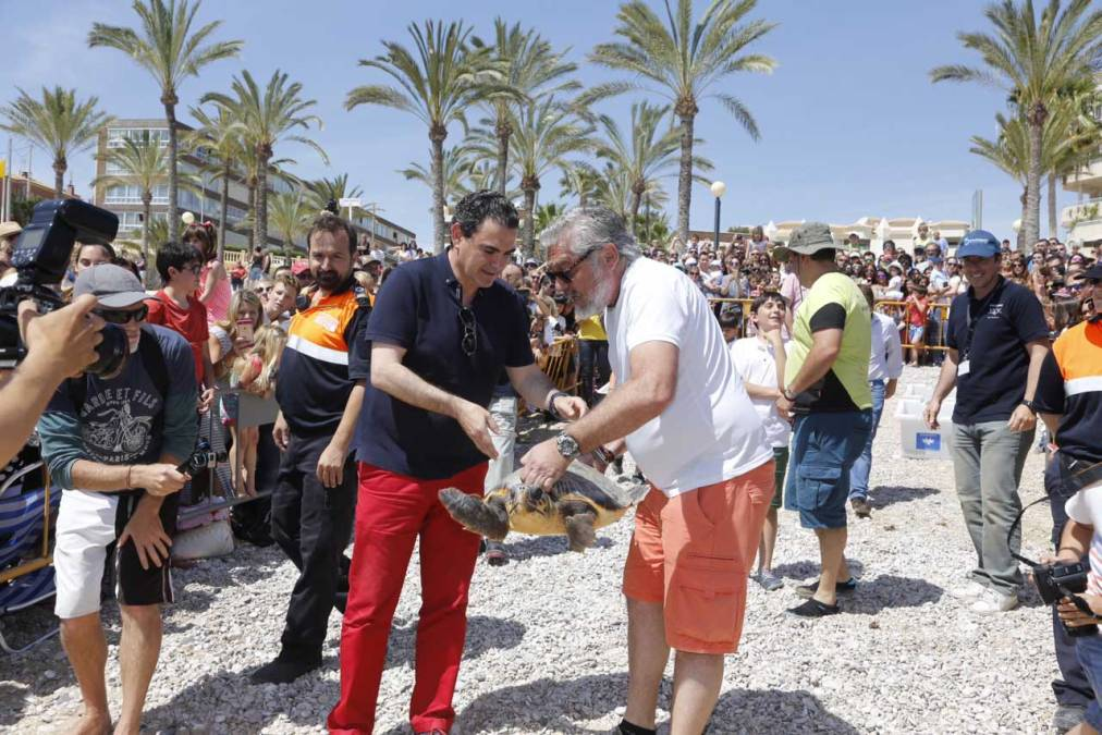 El Mediterráneo recupera cuatro 'Tortugas Bobas'