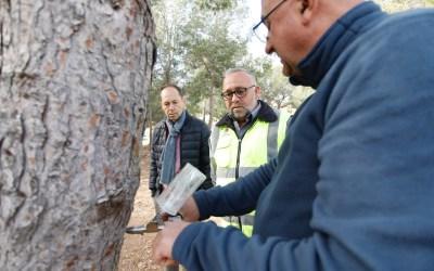 Endoterapia para combatir las plagas en los árboles y palmeras de l'Alfàs del Pi
