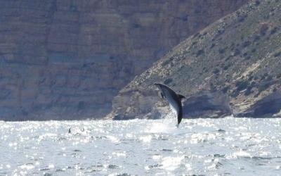 Avistamiento de delfines en las inmediaciones del faro de l'Albir