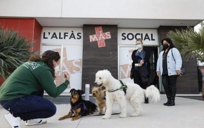 L'Alfàs emprende una nueva edición del programa formativo inclusivo 'Edukadogs'