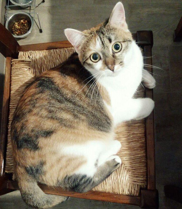 Maja the cat