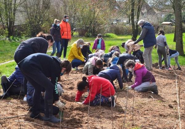 Plantation d'arbres et d'arbustes avec l'école Jean Moulin