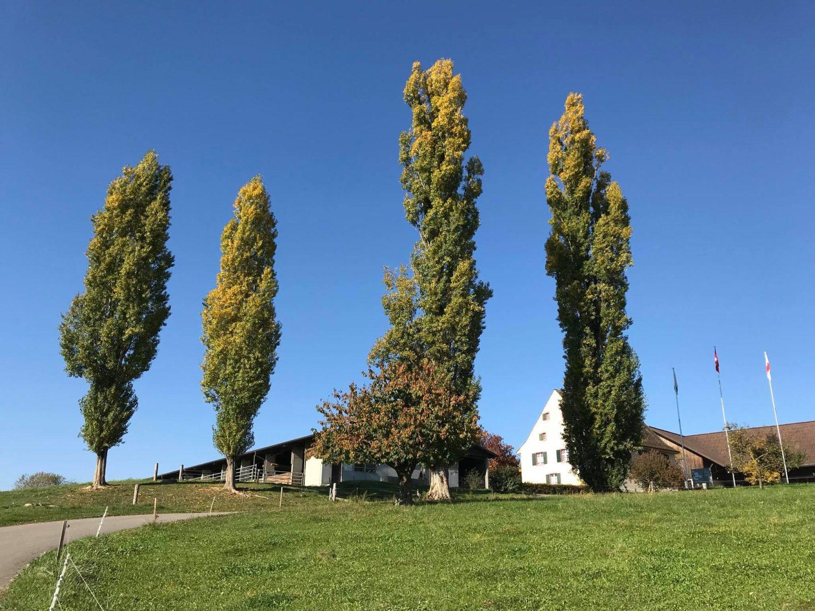 Schlatthof im Herbst