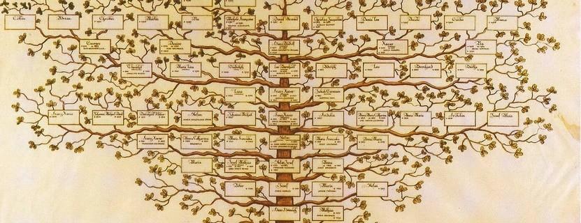 stammbaum1 - Stammbaum, warum