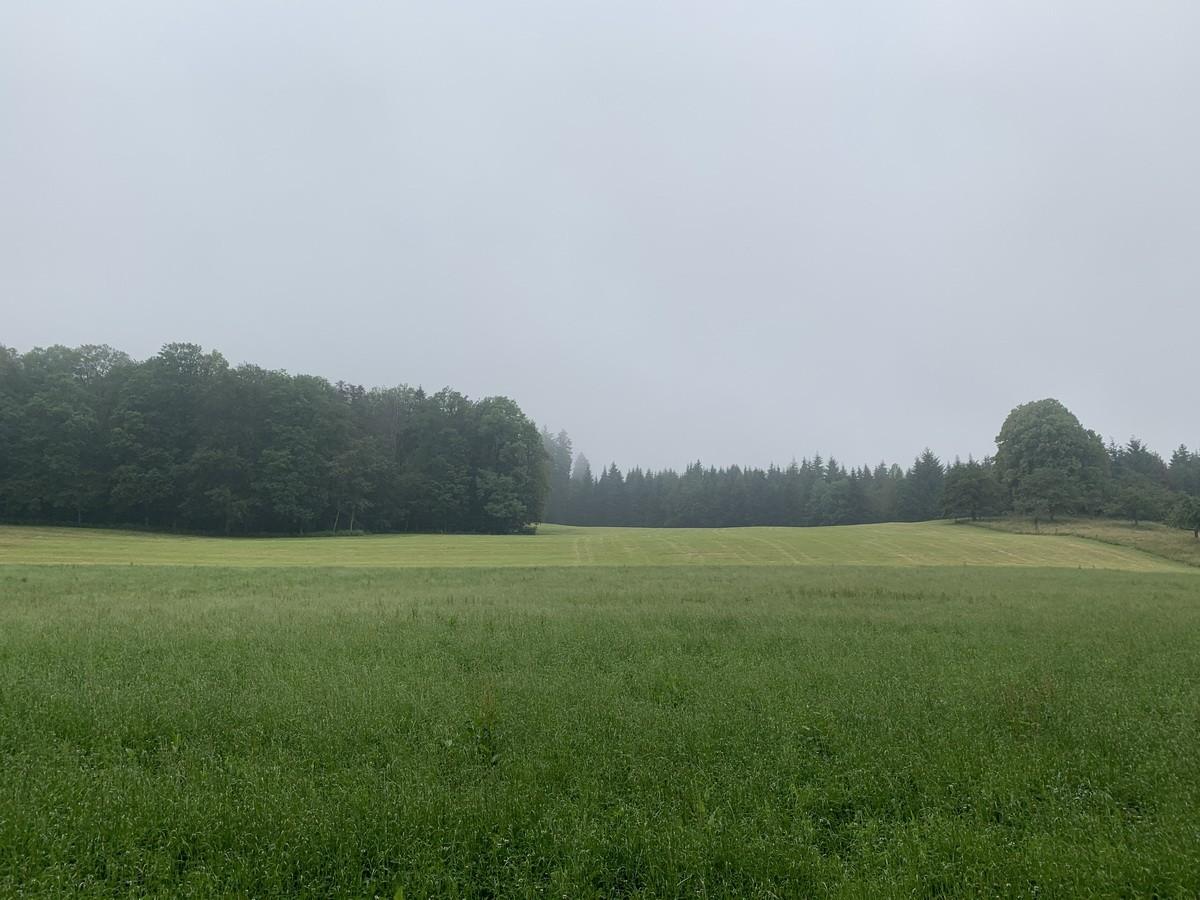 Grossi Weid