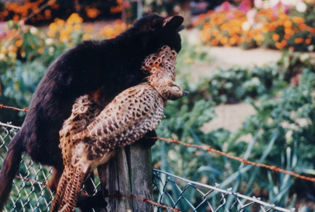 Wildernde Tiere