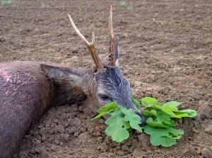 letzterbissen - Das Jagdbrauchtum