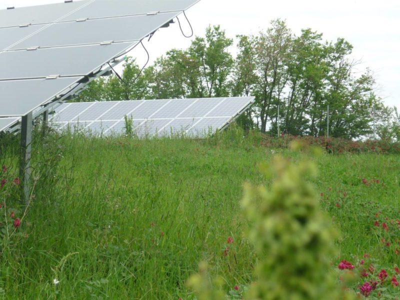 Ostra Vetere, erba alta nell'impianto fotovoltaico comunale