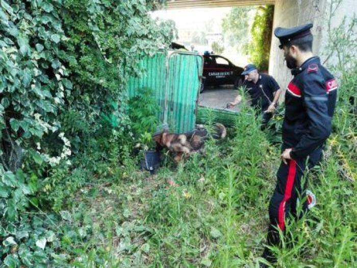 I carabinieri di Falconara impegnati in un controllo straordinario del territorio