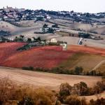 """Forza Italia ai Giovani democratici di Senigallia: """"La fusione con Morro d'Alba è solo un'operazione politica"""""""