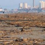 SENIGALLIA / Tonnellate di sabbia – l'oro della spiaggia di velluto – finiscono ogni anno in discarica