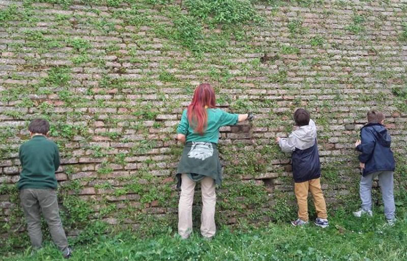 SENIGALLIA / I giovani scout del Cngei hanno pulito le mura intorno alla Rocca