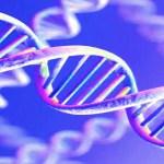 Genetica e tumori, se ne parla mercoledì in un convegno allaRotonda a Mare di Senigallia