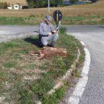 Un lupo decapitato ed abbandonato nella immediata periferia di Pergola