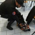 Continua nelle scuole di Senigallia la campagna di sensibilizzazione e prevenzione dei carabinieri contro l'uso della droga