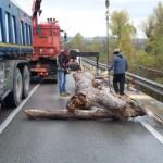 Avviata la rimozione dei grossi tronchi che ostruiscono le campate del ponte sul fiume Metauro