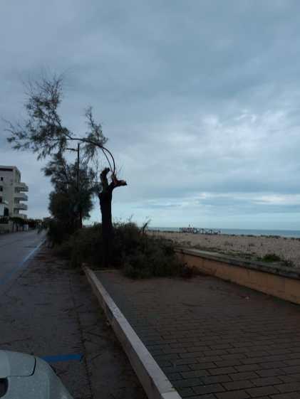 MARZOCCA lungomare alberi tagliati o in pericolo2019-10-06 (3)