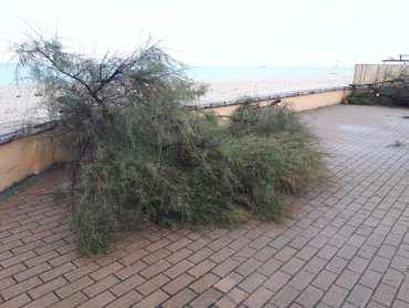 MARZOCCA lungomare alberi tagliati o in pericolo2019-10-06 (5)