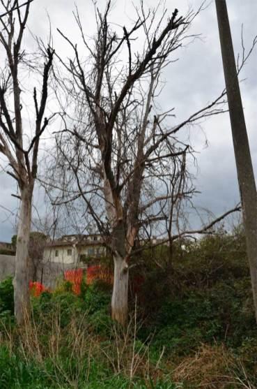 SENIGALLIA aree verdi parchi2020-03-03 (1)