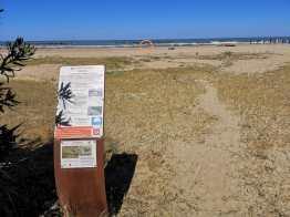 SENIGALLIA cartello fratino spiaggia2020-05-28